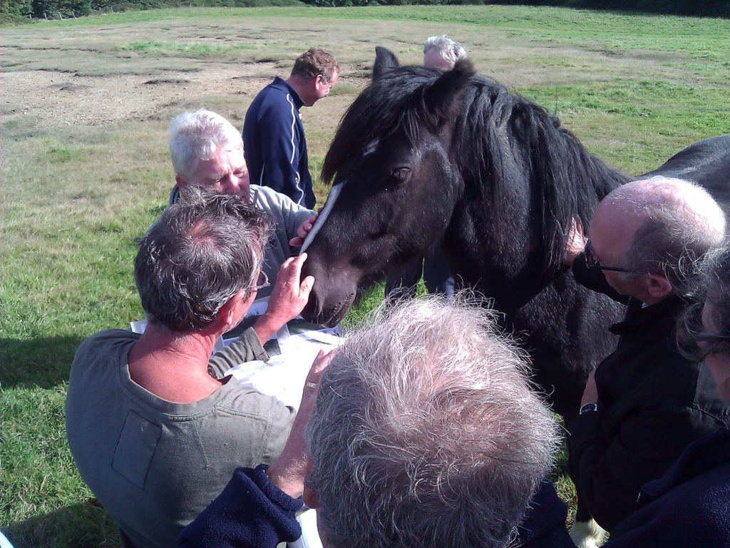 Residents joined by horse to hear about housing proposal